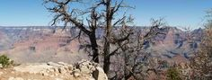 Find out how you can enjoy your trip to the Grand Canyon.