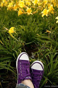 purple all star