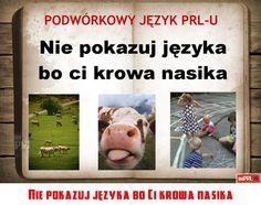 Poland People, Poland Country, Polish Language, My Childhood, Nostalgia, The Past, Memories, Baseball Cards, My Love