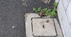 Sos Casagiove. Degrado urbano: marciapiedi pieni di escrementi - http://www.vivicasagiove.it/notizie/sos-casagiove-degrado-urbano-marciapiedi-pieni-di-escrementi/ - a cura di Redazione