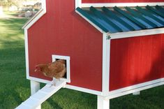 Chicken Coop Plans Free 399835273171066318 - Free Chicken Coop Plans – The Creative Mom Source by Chicken Coop Building Plans, Chicken Coop Plans Free, Cute Chicken Coops, Chicken Coop Designs, Backyard Chicken Coops, Chickens Backyard, Chicken Roost, Red Chicken, Chicken Ideas
