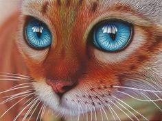 Blue Eyed Bengal (165 pieces)