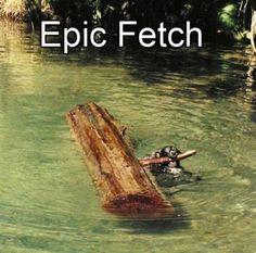 I got that owner a stick, epic fetch, log, tree