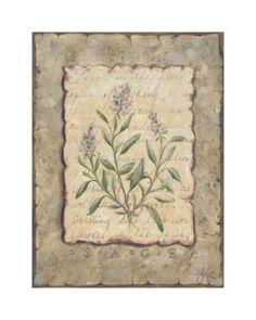 Vintage Herbs, Sage Láminas por Constance Lael en AllPosters.es