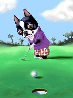 Boston terrier golfing