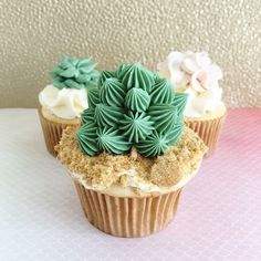 Succulent Cupcakes by Sinfully Sweet Cake Design Cactus Tacos, Succulent Cupcakes, 31 Party, Tacos And Tequila, Wax Seal Stamp, Ink Pads, Sweet Cakes, Let Them Eat Cake, Parties