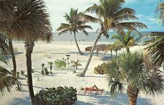 . Old Florida, Summer Collection, Nativity, Exotic, Palm, Spring Summer, Tumblr, Adventure, Painting