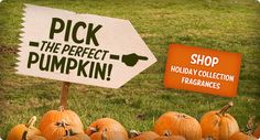Holiday Fragrances:  Autumn Sunset, Christmas Cottage, Festival of Trees, Pumpkin Marshmallow & Pumpkin Roll