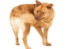 Dog Compulsive Disorder | OCD in Dogs | Strange Dog Behavior | petMD