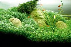 small tanks more aquarium inspo aquarium 2 aquascape aquarium aquarium ...