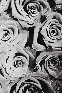 flower, rose, photography, black and white, grey,