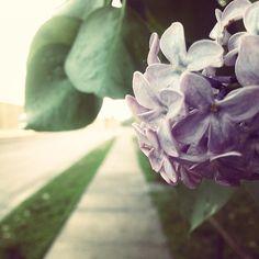 Simple yet gorgeous shot from http://instagram.com/asoomiijay! #GoBillings