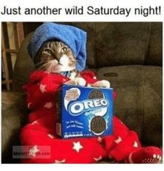 Funny Cat 30 Pictures