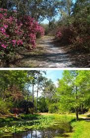 ravine gardens state park - Google Search