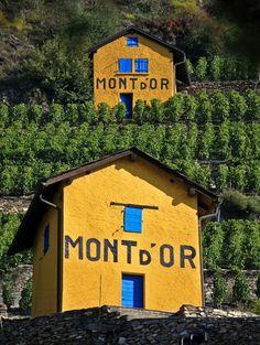 Vineyard, Sion, Switzerland Copyright: Claude Naef