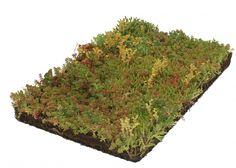 Kant & klare Bodembedekker als plantmatten   Kant-en-klare bodembedekkers in plantenmatten voor een direct zichtbaar resultaat. Met plantenmatten gaat u onkruid duurzaam te lijf in slechts enkele uren. Heeft u een stuk grond en wilt u direct genieten van het resultaat? Kant-en-klare plantenmatten zijn de oplossing!