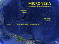Leaders in #Micronesia have pledged to create the world's largest shark sanctuary.