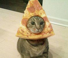 Quem não gosta? Gatos não podem ver uma pizza que acabam com a comida de uma só vez http://r7.com/SVcf  (Foto: Reprodução/Bforbel)