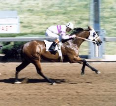 A look at the pedigree of Easy Date reveals exactly why the bay filly took the racing industry by storm in the mid – 70's. Easy Date was inducted into the Hall of Fame in 2002. Learn more about the AQHA Hall of Fame inductees at http://aqha.com/Foundation/Museum/Hall-of-Fame/Hall-of-Fame-Inductees.aspx .