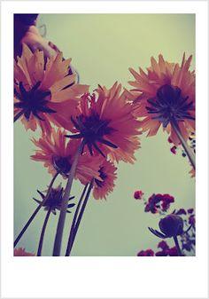i have a garden. mensi jazavcevic photography