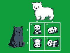 Codominance Panda, cute animal science shirt from TeeTurtle. Punnett Squares were never this adorable! Biology Jokes, Biology Teacher, Teaching Biology, Physics Humor, Chemistry Jokes, Engineering Humor, Teacher Memes, Teacher Stuff, Science Shirts