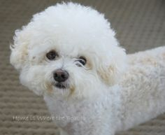 Gracie from the blog Home is Where the Boat Is. Precious!!