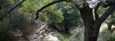 Despeñaperros quiere ser Dorne http://www.rural64.com/st/turismorural/Despenaperros-quiere-ser-Dorne-5452