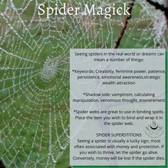 Wicca, Magick, Witchcraft, Animal Spirit Guides, Spirit Animal, The Real World, Book Of Shadows, Spiders, Spelling