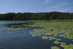 Großer Kotzower See