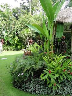 Browse landscape pictures, discover landscaping ideas and get tips from landscape design for creating your dream front yard landscaping or backyard landscaping ideas. Tropical Backyard Landscaping, Tropical Patio, Tropical Garden Design, Florida Landscaping, Outdoor Landscaping, Tropical Plants, Outdoor Gardens, Tropical Gardens, Landscaping Ideas