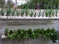 BEM VINDOS AO MIHOR - MINI HORTAS : Horta em cano de pvc Vertical Garden Diy, Building A Pergola, Planters, Patio, Hanging Gardens, Blazer, Bathroom, Projects, Vertical Vegetable Gardens