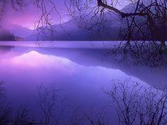 purple haze | via Pixdaus