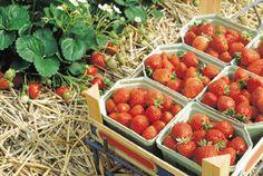 Fragaria Ananassa [Strawberry] ♡ Kitchen Garden #MyDreamGarden