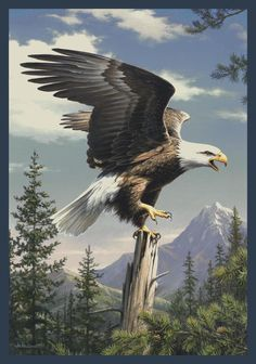 Screaming Eagle Hautman Brothers Scenic Nylon Indoor Area Rug