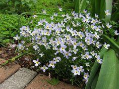 庭では食べられる植物を毎年増やしていっているけど、さすがに玄関や駐車場回りはそう...