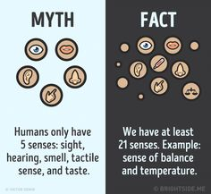12 Myths About The Human Body And Their Truths - We share because we care. A resource for sharing the latest memes, jokes and real stuff about parenting, relationships, food, and recipes Interesting Facts About Humans, Wierd Facts, Wow Facts, Intresting Facts, Wtf Fun Facts, Crazy Facts, Happy Facts, Strange Facts, Random Facts
