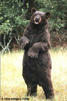 Realistic looking bear costume
