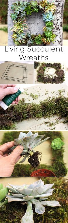 Beautiful! A living succulent wreath is great for any season! It can be made form cuttings or store-bought succulent plants and last all year long. Stunning. http://www.ehow.com/how_15263_make-living-succulent.html?utm_source=pinterest.com&utm_medium=referral&utm_content=inline&utm_campaign=fanpage