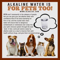 Alkaline Water is for Pets Too! | For more info about Alkaline Water: http://www.alkalux.com/knowledge-base/benefits-of-lonization.html