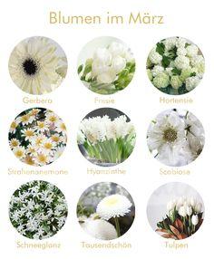 welche blumen gibt es im april schnittblumen saison kalender flowers wedding and flower. Black Bedroom Furniture Sets. Home Design Ideas