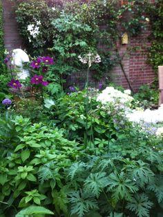 Clematis die normaal in juni bloeit