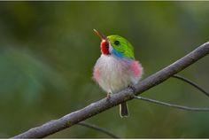 暖かくなってくると、どこからともなく鳥の声が聞こえてきて、春の訪れに気づいたりしますね。今日は、春にぴったりな鳥たちの姿をお届け...
