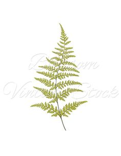 Botanical Printable Fern, Foliage Botanical Leaf Print, Digital Image, PNG Image for print, digital artwork - INSTANT DOWNLOAD - 1282