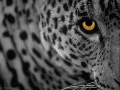 Download Beautiful White Bacground Leopard Apple Mac Desktop ...