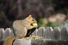 Vegetable garden planning is a multi-year process to find what works, what's tasty and what the squirrels won't eat