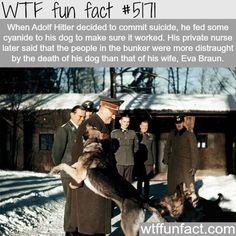 Adolf Hitler's dog, Blondi - WTF fun facts http://ibeebz.com