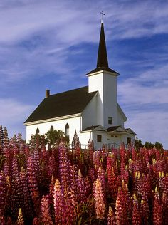 Nova Scotia Photograph - Nova Scotia Church by Dave Mills O Canada, Canada Travel, Mosques, Cathedrals, Atlantic Canada, Old Churches, Amazing Buildings, New Brunswick, Place Of Worship