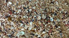 Cueva de las Golondrinas, PR #seashells #shells #nature #beach #sand