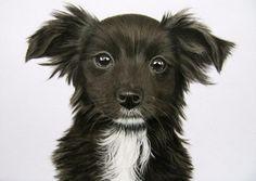 TEKENINGEN VAN MENS EN DIER Graphite Drawings, Cute Puppies, Daisy, Paintings, Animals, Blogging, Kunst, Animales, Paint