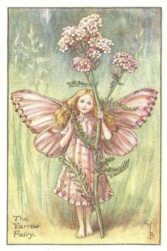 http://www.wellandantiquemaps.co.uk/lg_images/The-Yarrow-Fairy.jpg